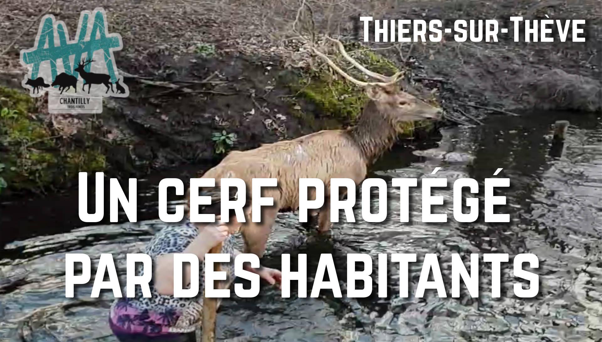 chasse à courre thiers sur thève trois forêts